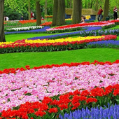 Gardens Wallpapers icon