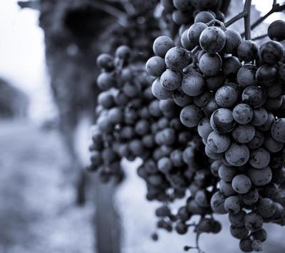 Grape Wallpapers screenshot 5