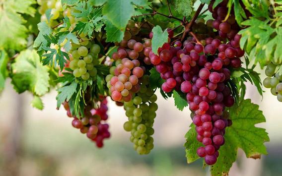 Grape Wallpapers screenshot 7