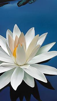 Lotus Wallpapers apk screenshot