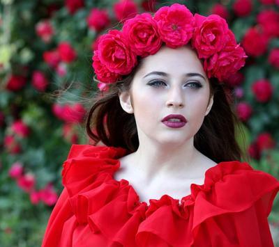 Red Rose Wallpapers screenshot 3
