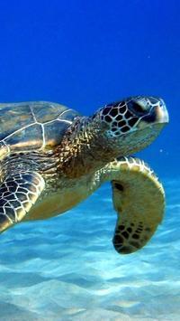 Turtles Wallpapers apk screenshot