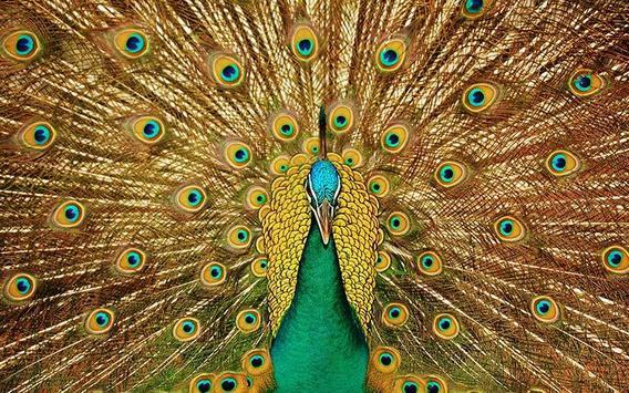 Master Puzzle - Birds apk screenshot