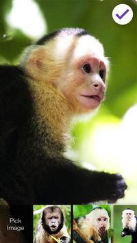 Capuchin Monkey Screen Lock screenshot 2
