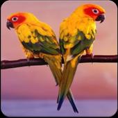 Sun Conure Bird Sound : Happy Sun Conure Sounds icon