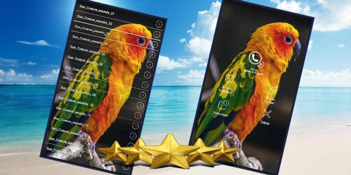 Sun Conure Bird Sound : Happy Sun Conure Sounds screenshot 1