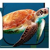 Turtle Underwater Live WP icon