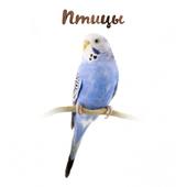 Уход за птицами icon