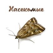 Борьба с насекомыми icon