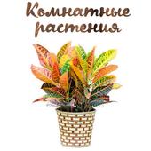 Домашние растения icon