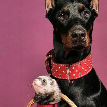 Dobermann Dogs Jigsaw Puzzles screenshot 3