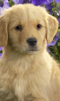 Golden Retriever Dogs Jigsaw Puzzles screenshot 1