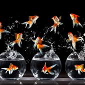 Funny Fish Wallpaper icon