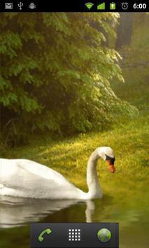 swan wallpapers apk screenshot