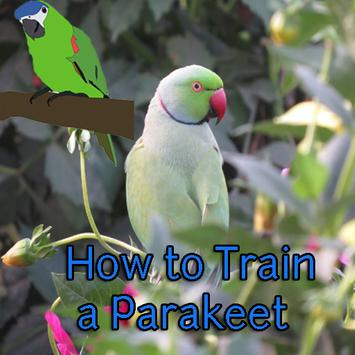 How to Train a Parakeet poster