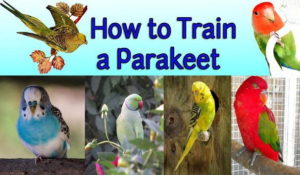 How to Train a Parakeet apk screenshot
