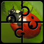 Ladybug HD Jigsaw Puzzle icon