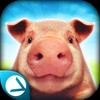 Pig Simulator biểu tượng