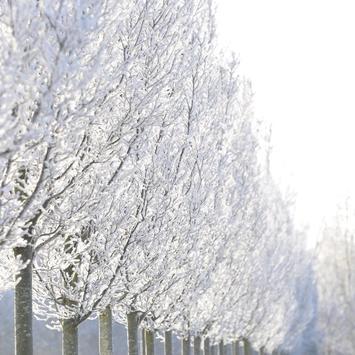 Frost Wallpapers apk screenshot