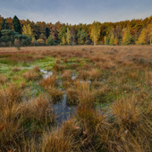 Swamp Wallpapers icon