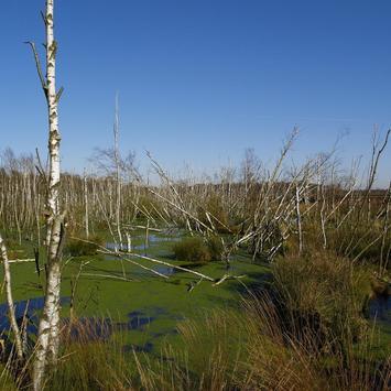 Swamp Wallpapers apk screenshot