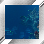 Aquarium Photo Frames icon