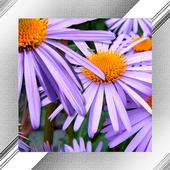 Blossom Photo Frames icon