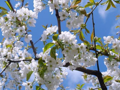 Blossom Photo Frames poster