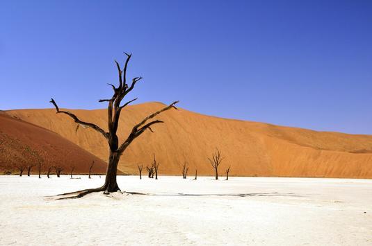 Desert Photo Frames apk screenshot
