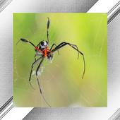 Spider Photo Frames icon
