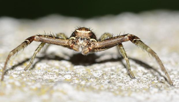 Spider Photo Frames apk screenshot