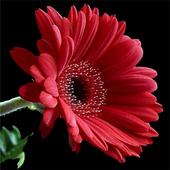 FlowersButterfly HD icon