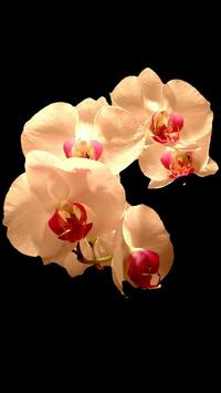 FlowersButterfly HD apk screenshot