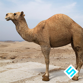 Rapid Camel Simulator icon