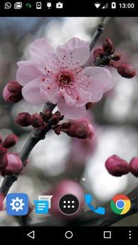 sakura tree wallpaper apk screenshot