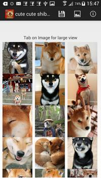 cute cute shiba dog wallpaper screenshot 1