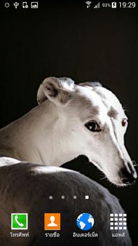 Greyhound Wallpaper poster