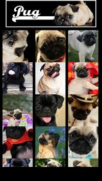 Pug Wallpaper screenshot 1