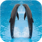 Dolphin LiveWallpaper icon