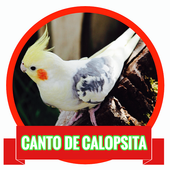 Canto de Calopsita MP3 icon