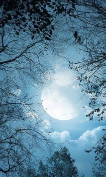 Beautiful Moon Wallpapers screenshot 2