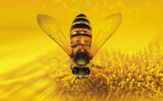 Bee Wallpapers apk screenshot