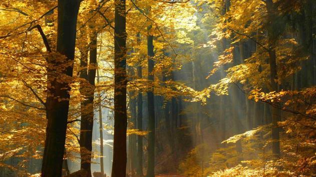 Forest Wallpapers screenshot 1