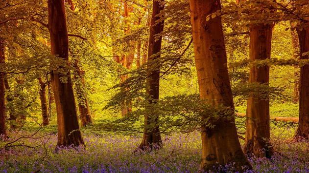 Forest Wallpapers screenshot 3
