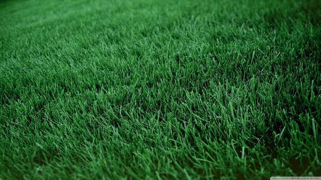 Grass Wallpapers apk screenshot