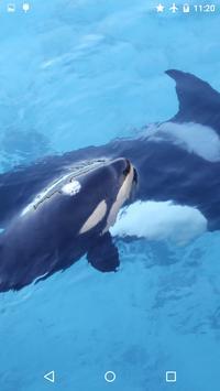 Orca Killer Whale apk screenshot