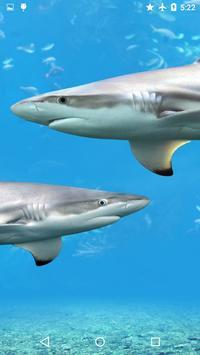 Sharks Underwater poster