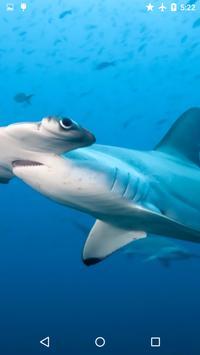 Sharks Underwater screenshot 2