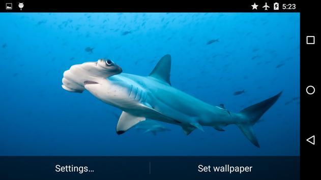 Sharks Underwater screenshot 4