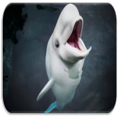 Beluga Whale sounds icon